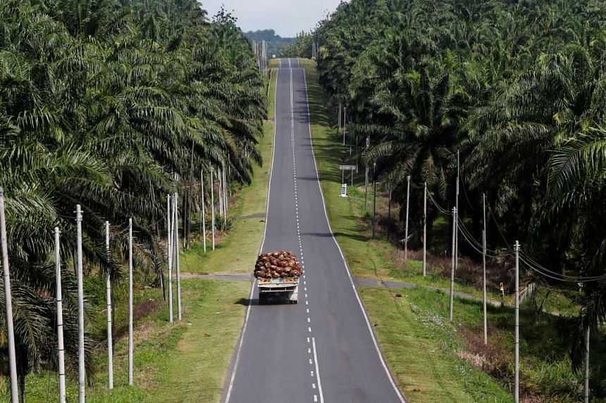 A truck carrying harvested oil palm passing through Felda Sahabat plantation in Lahad Datu in Sabah, East Malaysia on Feb 20, 2013. Felda settlers are a crucial support base for Umno and there has been much unease over recent losses at its FGV unit.