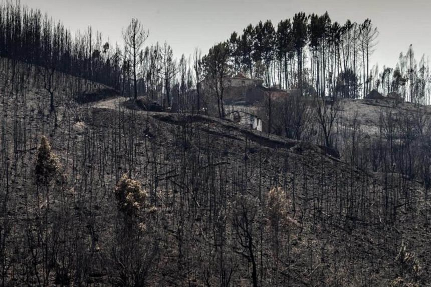 Burned trees in the aftermath of forest fire near the Mosteiro village, Pedrogao Grande, Portugal, on  June 21, 2017.