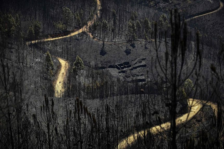 Burnt forest areas in Vale do Cambra, some 30km to Pedrograo Grande. The huge forest fires in Portugal erupted last Saturday and spread at breakneck speed.