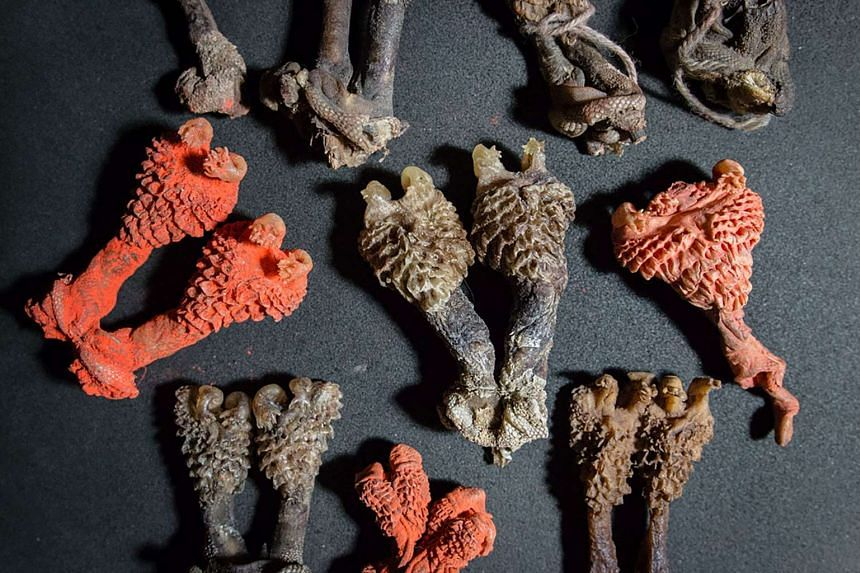 A handout photograph from World Animal Protection released on June 20, 2017 shows dried monitor lizard penises that were being sold online by an Indian man who has since been arrested.