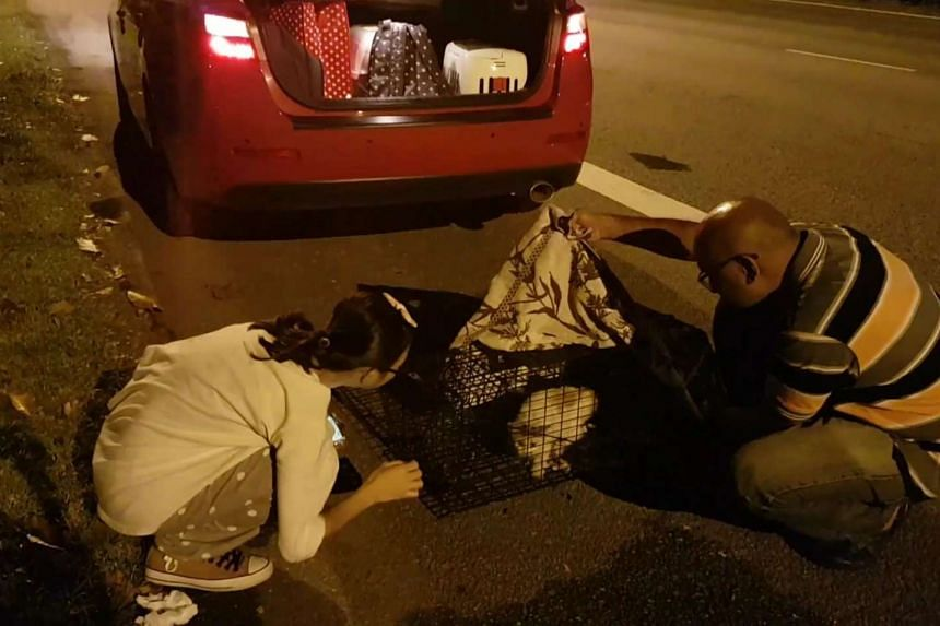 Mr Mohamed Eliyas (right) with a cat he helped rescue from the PIE median.