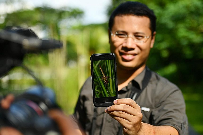 Minister Desmond Lee, 40, with a photo he took of a crimson dropwing dragonfly at Windsor Nature Park last Thursday.