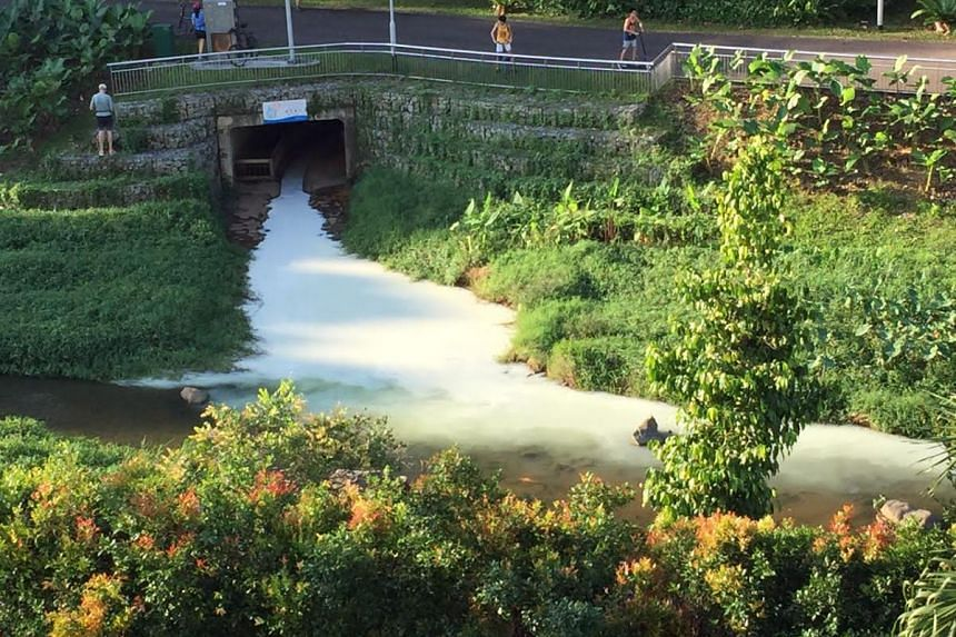 A white liquid was spotted flowing out of Kallang River at Bishan-Ang Mo Kio Park on Saturday.