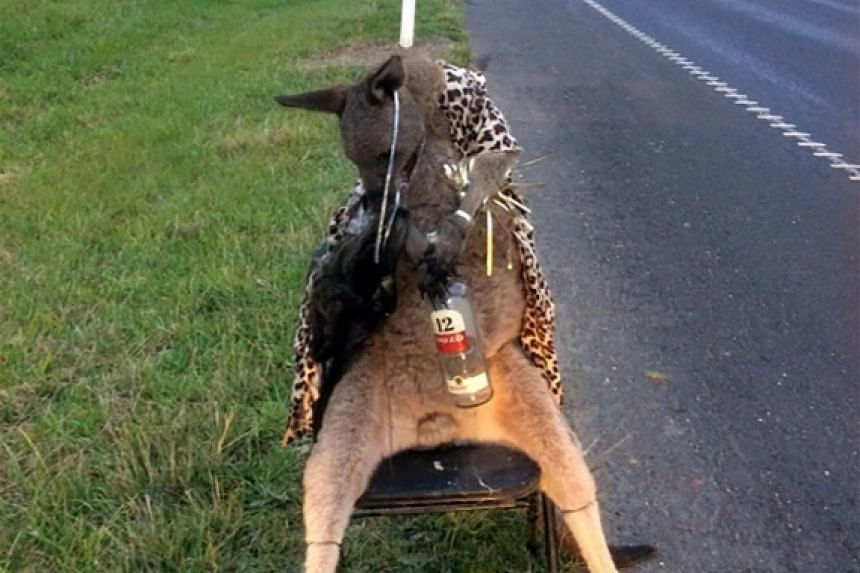 A dead kangaroo tied to a chair was found at the roadside on the outskirts of Melbourne on June 28