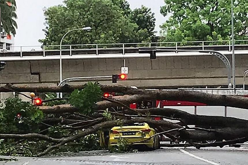 Cabby Loo Chee Soon had a lucky escape after this massive tree fell on his taxi yesterday, while it was stopped at the junction of Choa Chu Kang North 6 and Choa Chu Kang Drive. Passers-by said it was raining heavily before the incident, which happen