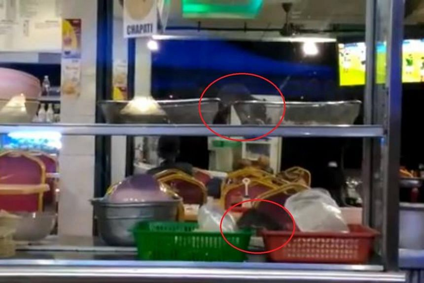 Two rats rummaging through food in a food display cabinet at the Likas Plaza.