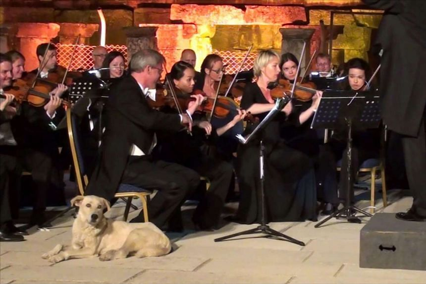 The dog takes up his prime spot next to the band at the concert in Izmir.