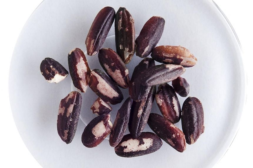 The new purple rice as biofortified food, and they will also try to engineer the biosynthesis of anthocyanins in other crops to produce more purple cereals.