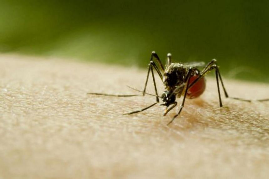 A still from Mosquito shows an aedes aegypti, an insect capable of carrying multiple diseases.