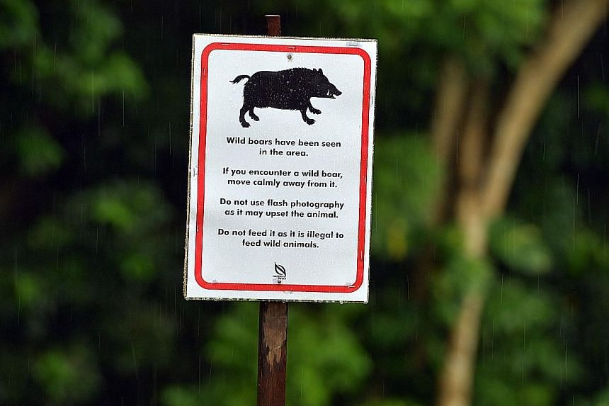 NParks has placed signs in Windsor Nature Park to advise visitors on what to do when they encounter a wild boar.