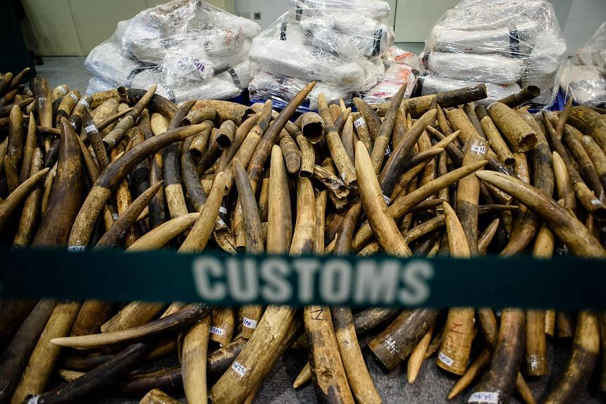 The seized elephant tusks being displayed at a press conference in Hong Kong on July 6, 2017.