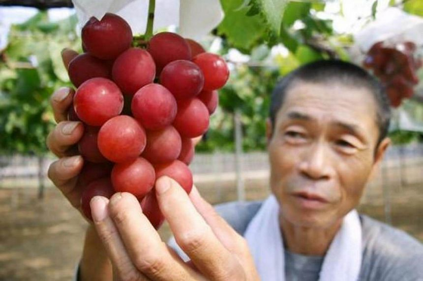"A cluster of ""Ruby Roman"" grapes at a vineyard in Ishikawa prefecture, northern Japan, on Aug 11, 2008."