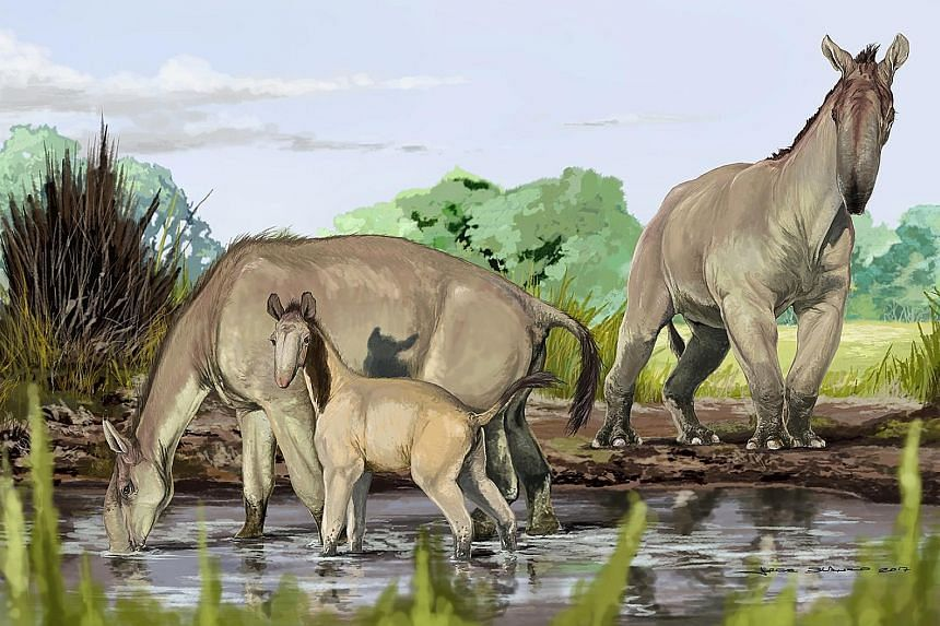 An artist's reconstruction of Macrauchenia. Researchers reconstructed about 80 per cent of Macrauchenia's mitochondrial genome. By comparing this mitogenome with the mitogenomes of many mammals, scientists were able to place Macrauchenia as sister to
