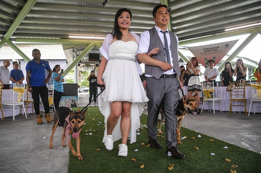 Shelter dogs Alibi (far left) and Timon made a couple's walk down the aisle extra special in the first wedding ceremony held at the Society for the Prevention of Cruelty to Animals' compound at Sungei Tengah yesterday. Ms Janz Chan and Mr Jeffrey Ng,