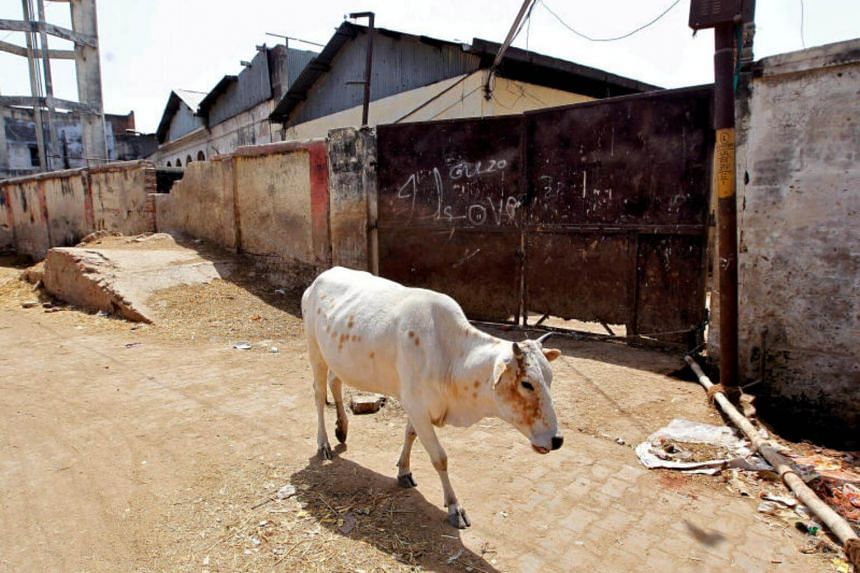 A cow walks past a closed slaughter house in Allahabad, India, on March 28, 2017.