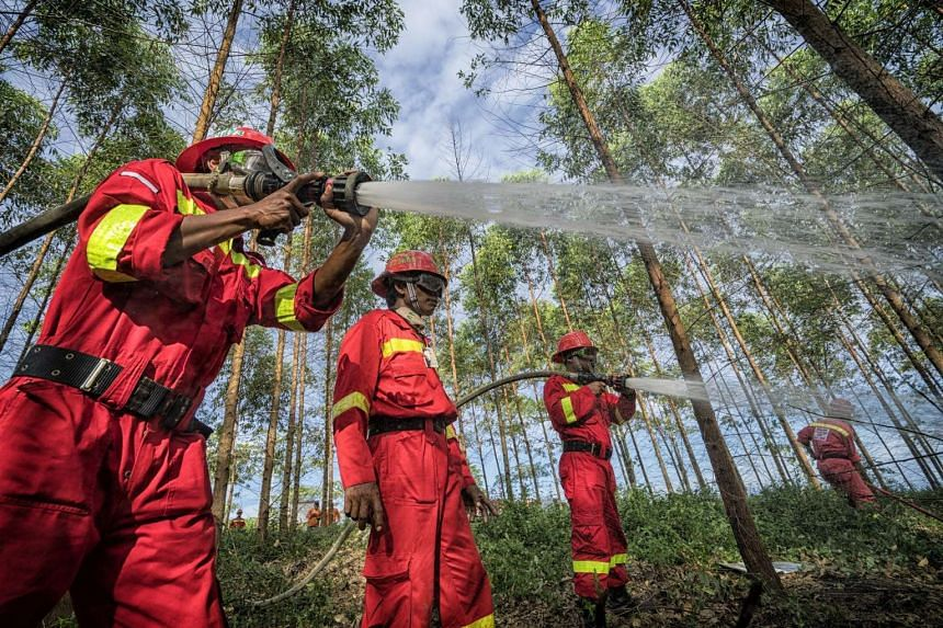Mr Rogando and his team specialise in peatland fires. These spread quicker than normal ones, given the high flammability of peat, and can occur both above and below the ground.