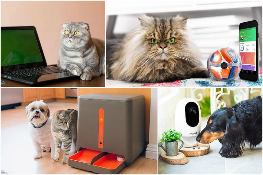 Smart pet devices tap the close relationship owners have with their animal companion.