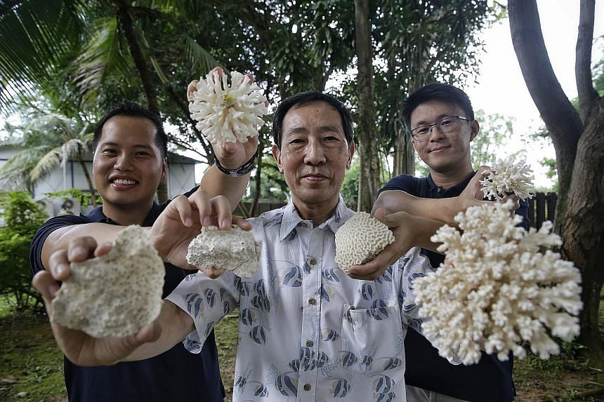 (From far left) Dr Toh Tai Chong, Professor Chou Loke Ming and Mr Lionel Ng, who were involved in the NUS study. It examined the marine life on reef enhancement units at six sites around Singapore's southern islands in 2014 - more than a decade after