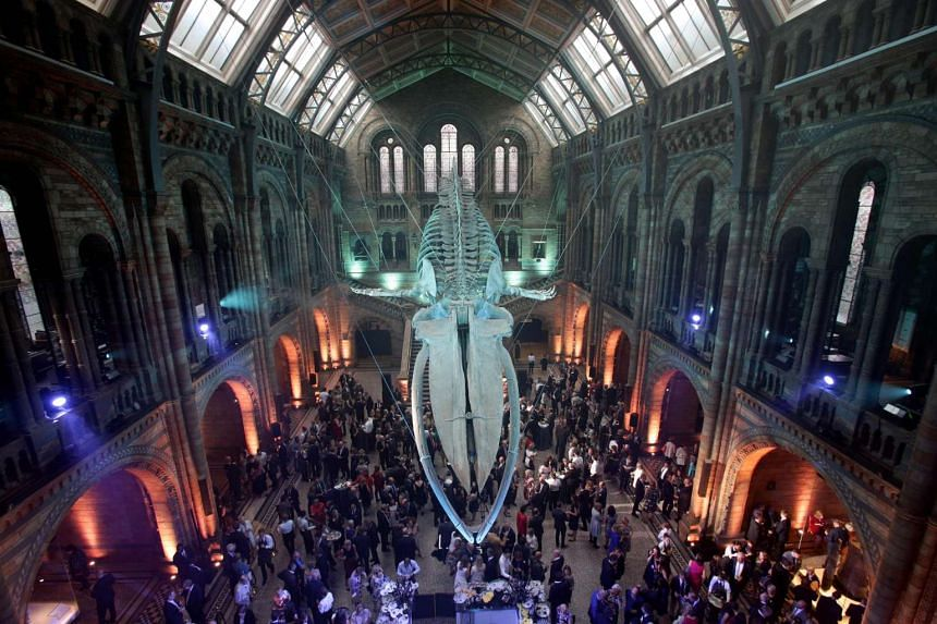 Guests mingle beneath a blue whale skeleton on display as part of the reopening of Hintze Hall at the Natural History Museum in London on July 13, 2017.
