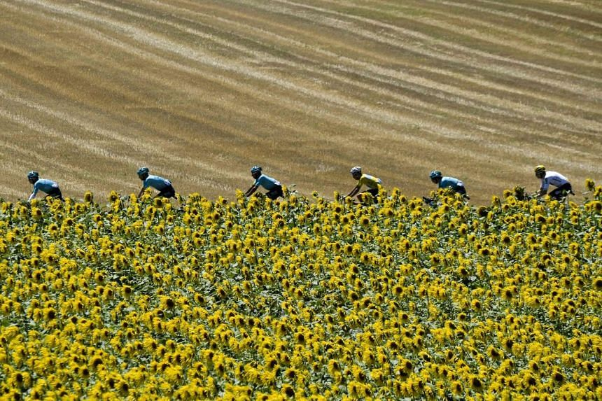 Italy's Fabio Aru (4th left), wearing the overall leader's yellow jersey, rides behind his teammates past a sunflowers field during the 181,5 km fourteenth stage of the 104th edition of the Tour de France cycling race on July 15, 2017 between Blagnac