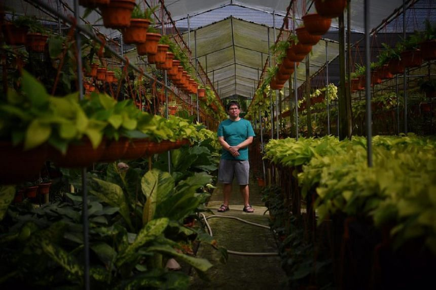 Project manager Mac Teo, pictured at Koon Lee Nursery. The nursery is one of the six farms which will make way for the expansion of Tengah Air Base.