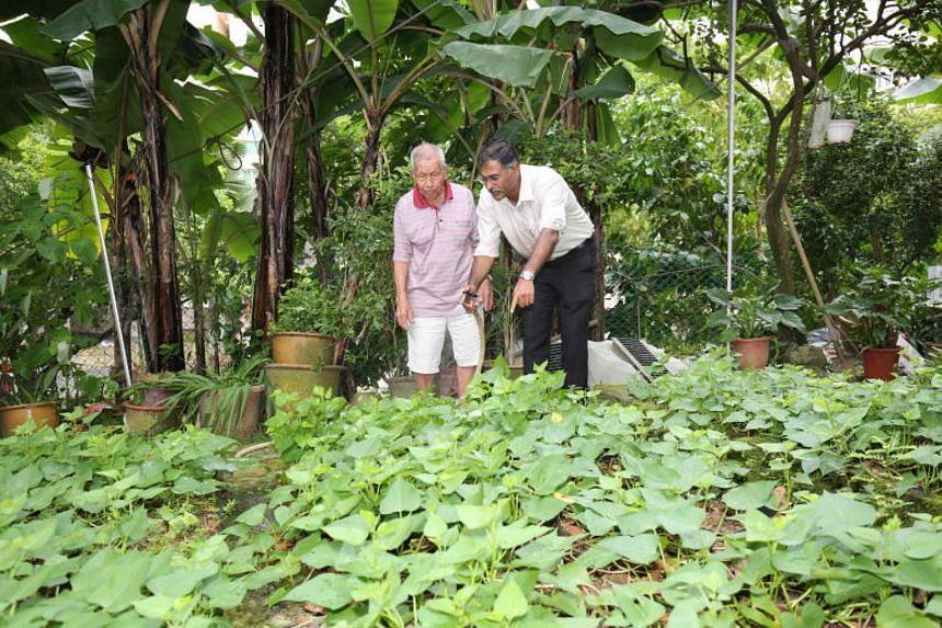 Bukit Batok MP Murali Pillai visited Mr Low Hai Ng, 98, in his community garden at Bukit Batok Zone 8 Block 219.