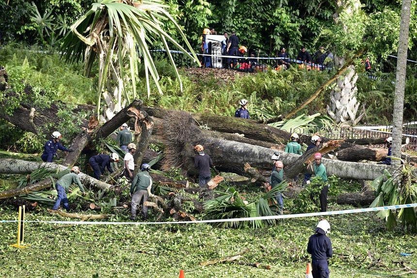 Ms Radhika Angara's father and husband, Mr Jerome Rouch-Sirech, attended the inquiry. A 270-year-old heritage tree fell on her in February, while she was with her family at the Botanic Gardens. She died in hospital from traumatic asphyxia and broken