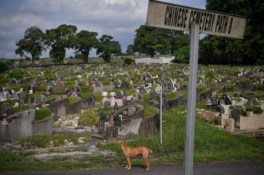 Choa Chu Kang's Chinese Cemetery. Some 80,500 Chinese and Muslim graves will be exhumed progressively to expand Tengah Air Base.