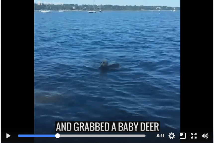 Storm finds the deer in the water. PHOTO: SCREENGRAB FROM FACEBOOK/UNILAD