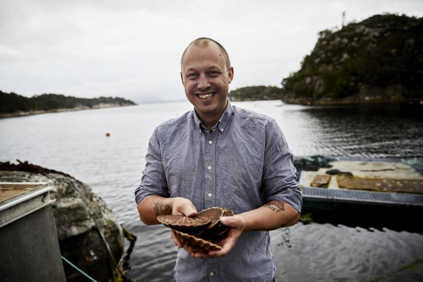 Chef Christopher Haatuft with scallops from the fjord near Bergen on the west coast of Norway. New Nordic chefs are guided by solemn manifestoes about nature and culture and often restrict themselves to Scandinavian ingredients. Haatuft, who is the o