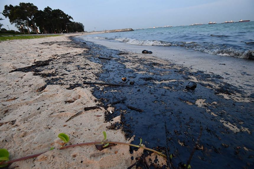 Black patches of oil are seen along an estimated 300m stretch of the beach.