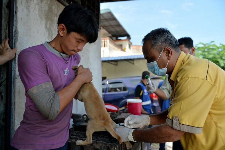 Staff of the Perak state veterinary department vaccinating a pet dog against rabies in Kuala Sepetang on July 18, 2017