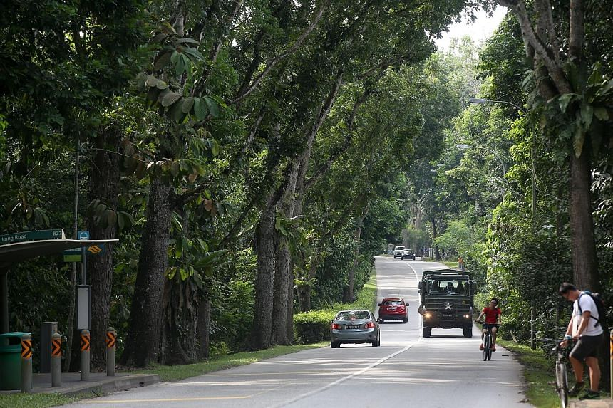 The Tengah Air Base expansion will see the Lim Chu Kang Road realigned. The affected portion includes a 1.8km heritage road, one of five here characterised by tall, mature trees with overarching tree canopies.