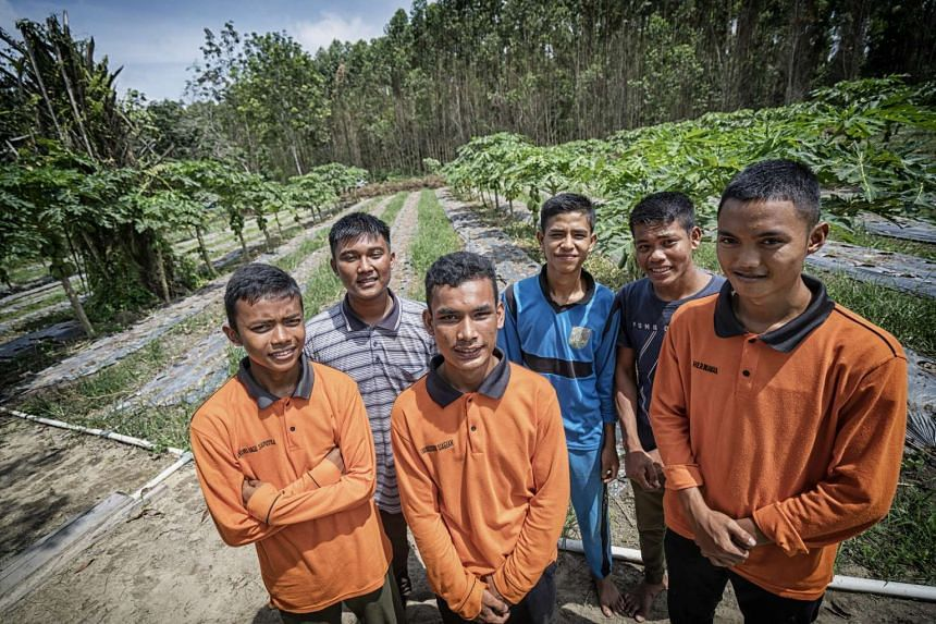 Interns at a local school specialised in agriculture have been learning useful skills while being attached to Mr Suryono's farm.