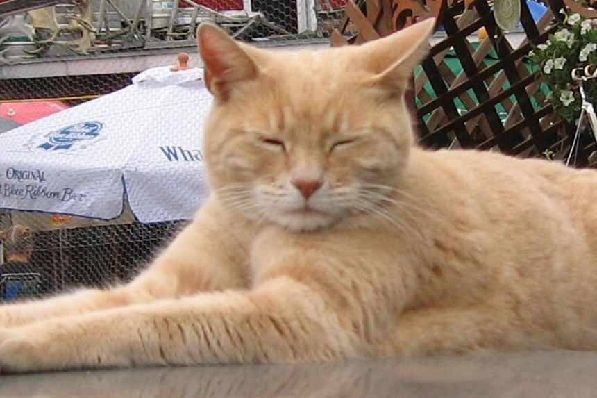 Stubbs, the unofficial mayor and a tourist attraction for the small Alaska town of Talkeetna.