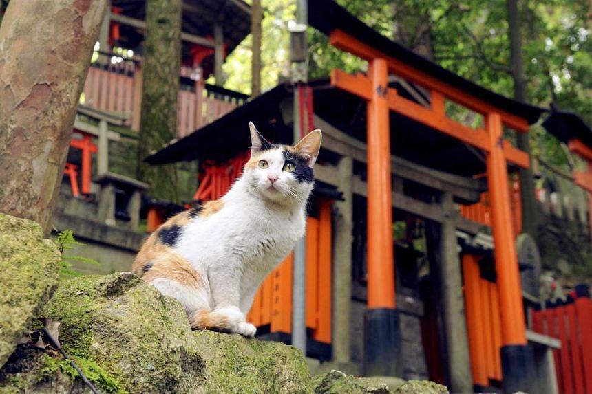 A cat from Fushima Inari Taisha in Kyoto, Japan.