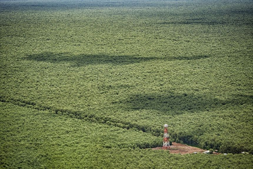 APP has identified forests of High Conservation Value and High Carbon Stock, designated for protection in all 38 of its suppliers' concessions.