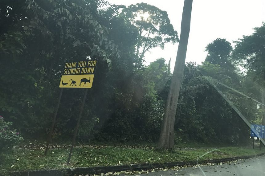 A wildlife crossing sign along Mandai Lake Road.