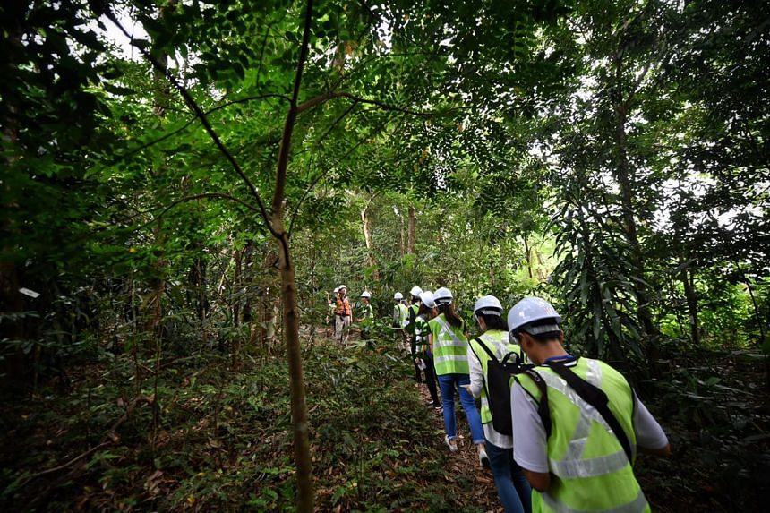 To protect local wildlife in Mandai, animals will be shepherded away from work sites and trees will be inspected and tagged by arborists.