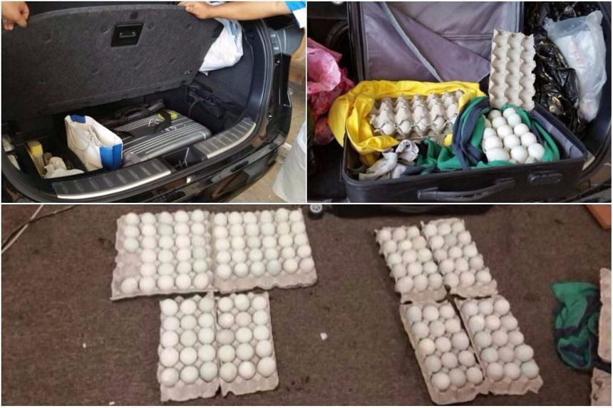 Lea Soon Lieo concealed the eggs in two suitcases inside the boot and tyre compartment of a car.