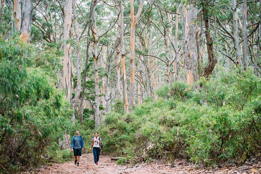 Take a stroll through beautiful Boranup Forest