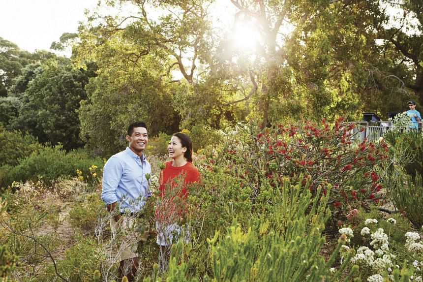 Enjoy Nature's best at Kings Park and Botanic Garden