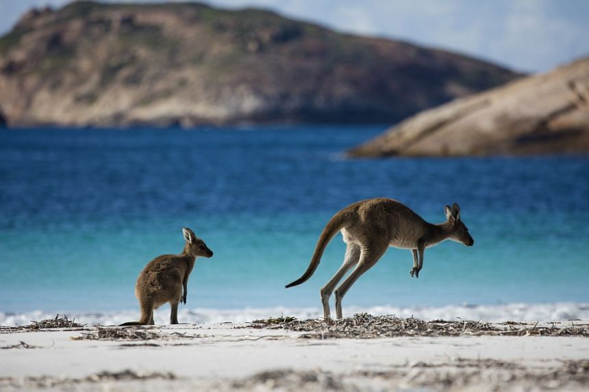 Lucky Bay is Australia's whitest beach