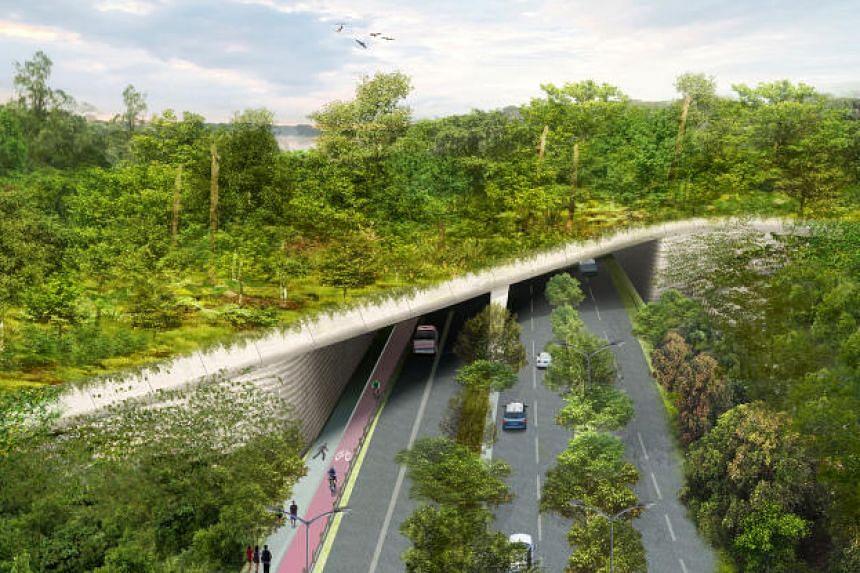 An artist's impression of the new Eco-Link bridge over Mandai Lake Road.