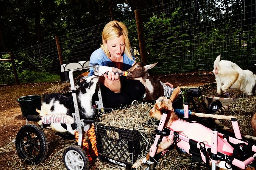 Leanne Lauricella, who owns a goat sanctuary in Annandale, New Jersey. Goats have become the hot new pet, not to mention a ubiquitous presence on Instagram.