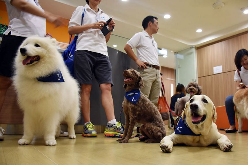 (Front row, from far left) Therapy Dogs, Singapore president Jun Sochi and vice-president Augustine Chai with volunteers Eunice Chang, Janice Ho, Joe Thang and Tan Hsiang Yue, and (back row, from far left) Hannah Chiang, Srilatha Balasubramanian, Ang