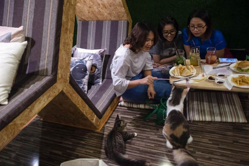 Customers interacting with cats at the Catpuchino Cafe in Yangon on July 15, 2017.
