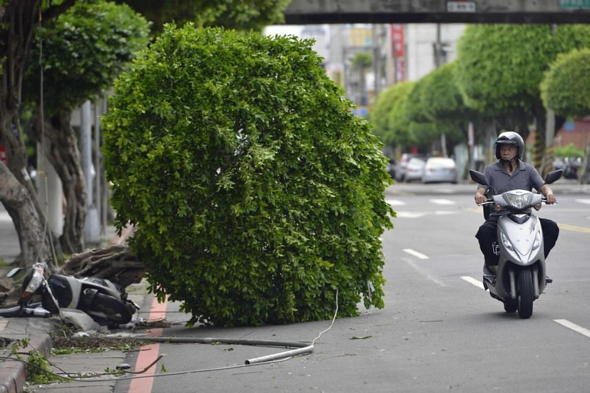 A motorcyclist rides past a damaged tree on the street in New Taipei City on July 30, 2017.