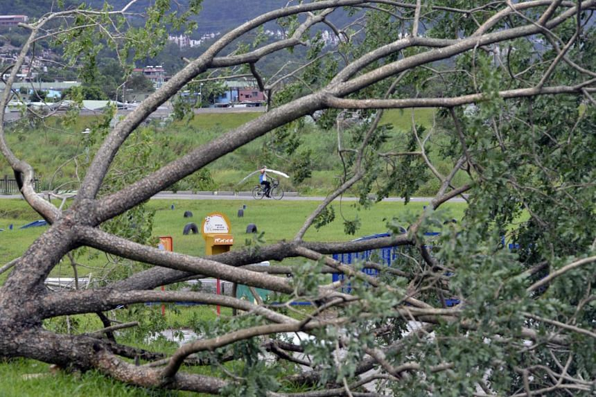 A man rides past a damaged tree by a river bank in New Taipei City on July 30, 2017.