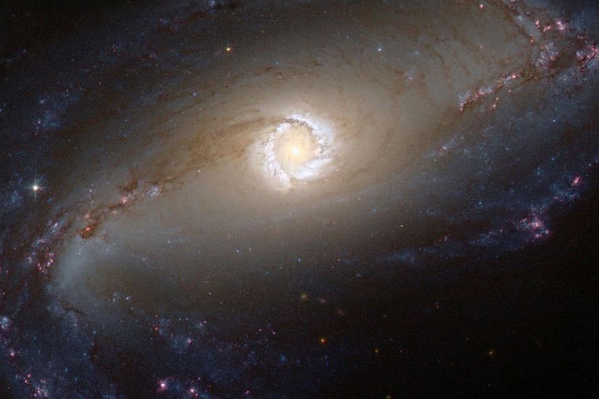 A NASA/ESA Hubble Space Telescope image shows a bright star-forming ring that surrounds the heart of a barred spiral galaxy.